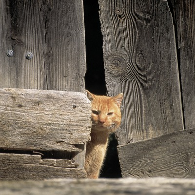 Cat in the countryside  (© Servicios Editorials Georama)