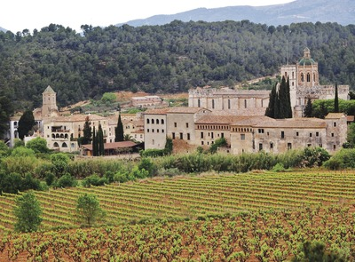 Vineyards at the foot of the monastery (© Maria Rosa Ferré)