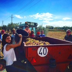 Grape Harvest & Family