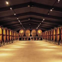 Abadal Winery: Route to the vineyard huts in Bages